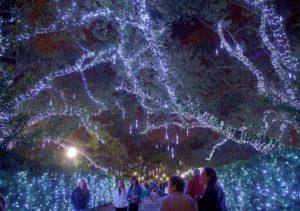Naveen Kailas Crescent City Christmas